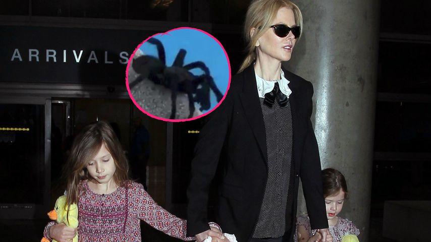 Ihre Kids rasten aus: Nicole Kidman rettet Riesenspinne!