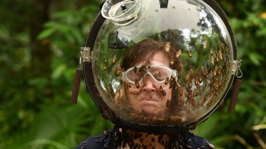 Danni Büchner bei der Dschungelprüfung