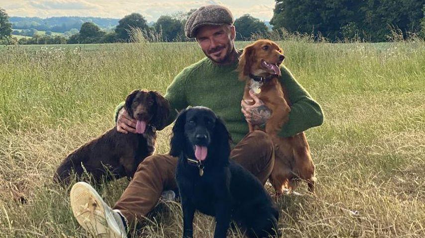David Beckham mit seinen drei Hunden, 2020