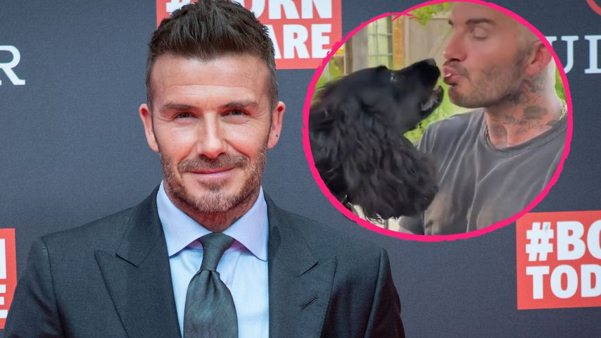 Große Tierliebe: David Beckham füttert Hunde mit dem Mund