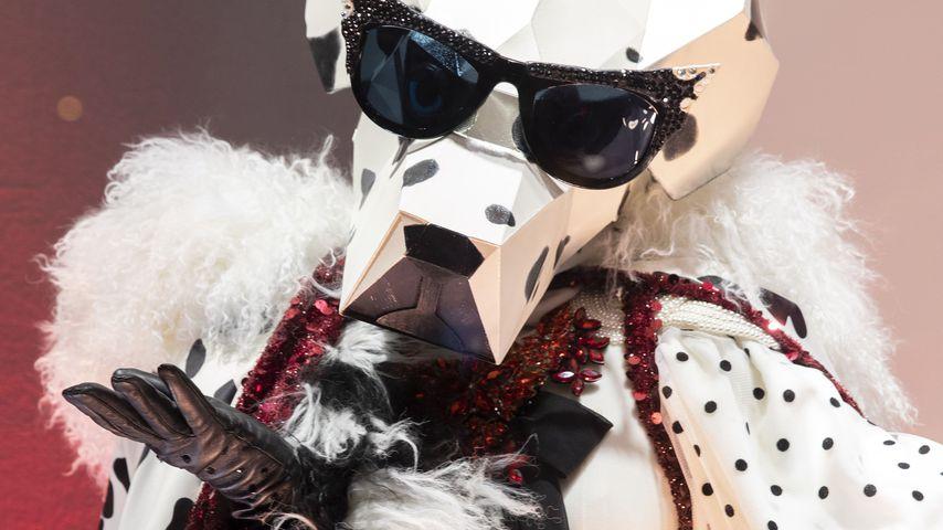"""Der """"The Masked Singer""""-Dalmatiner"""