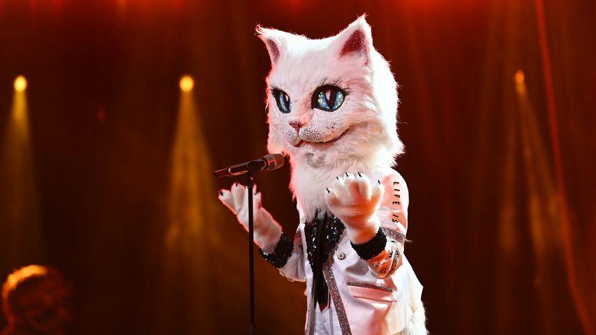 """Die Katze im """"The Masked Singer""""-Halbfinale"""