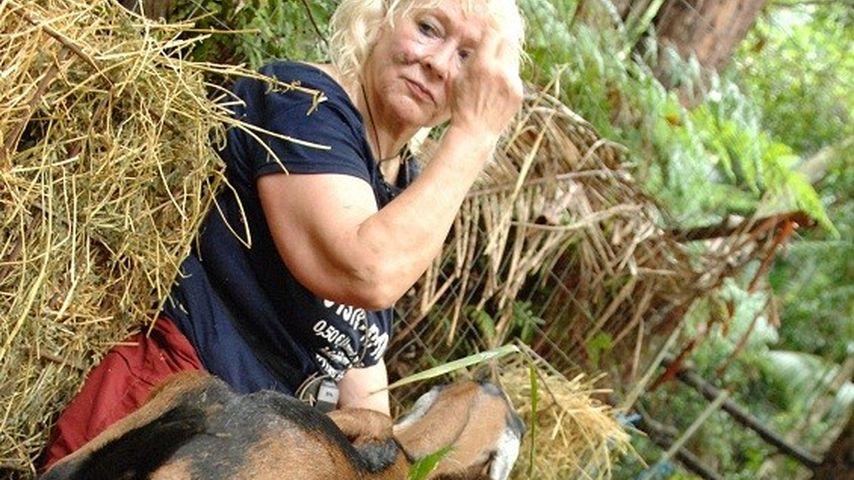 Dschungelcamp: Froonck und Eva legen Hand an