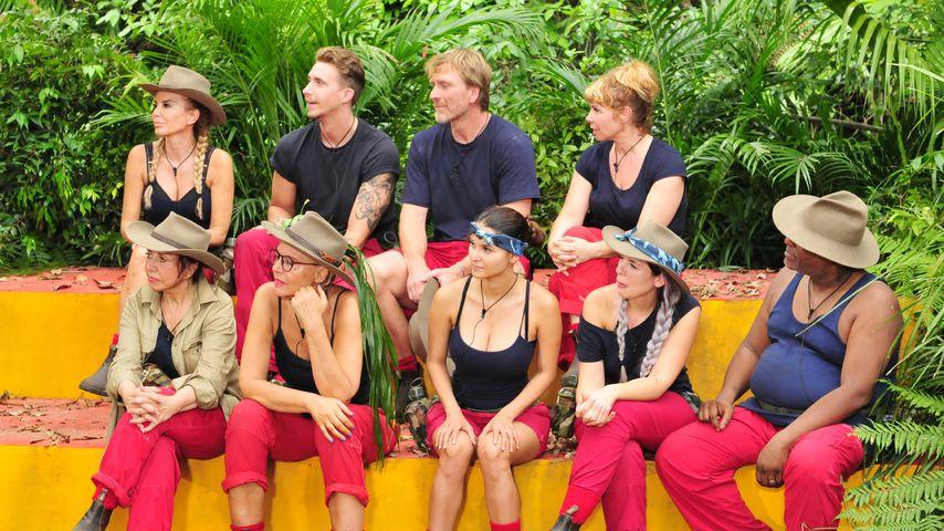 An Tag 10 im Dschungel: ER ist euer Favorit für die Krone!