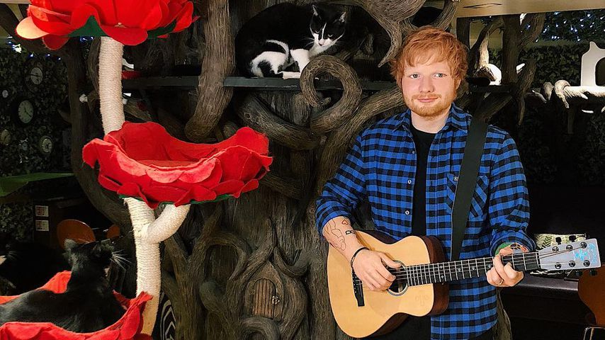In Londons erstem Katzencafé: Ed Sheeran-Wachsfigur enthüllt