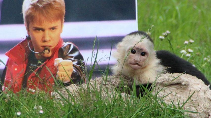 Experte zu Bieber-Fans: Affen sind keine Haustiere