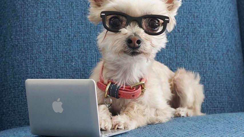 Fast eingeschläfert: Fashion-Hund Ella begeistert das Netz!