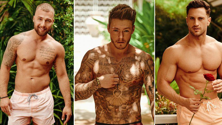 "Achtung, Muskeln: Das sind die ""Bachelor in Paradise""-Boys!"