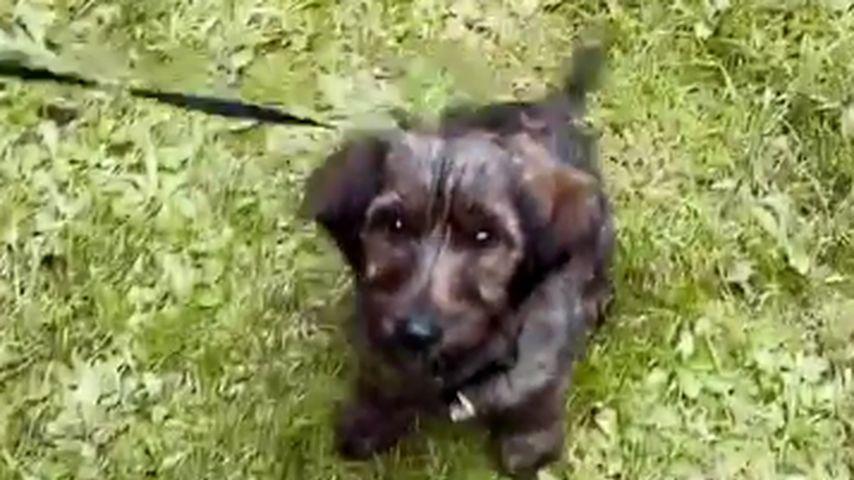 Gerda Lewis' Hund Teddy