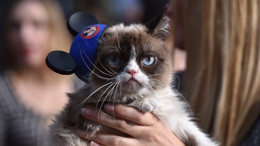 Warum so mürrisch? Grumpy Cat bekommt eine Wachsfigur!