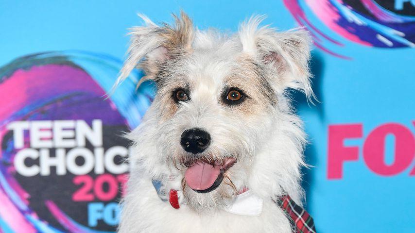 Teen Choice Awards '17: Tierischer Alarm auf dem Red Carpet