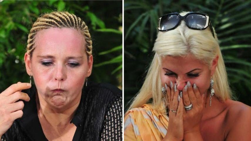 Helena gegen Sophia! Wer rockt die Dschungelprüfung?