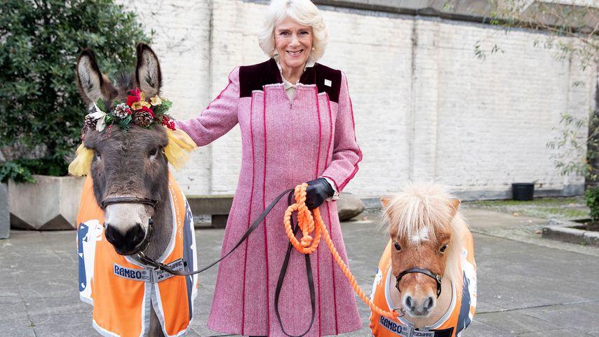 Ohne Charles: Herzogin Camilla in tierisch guter Begleitung