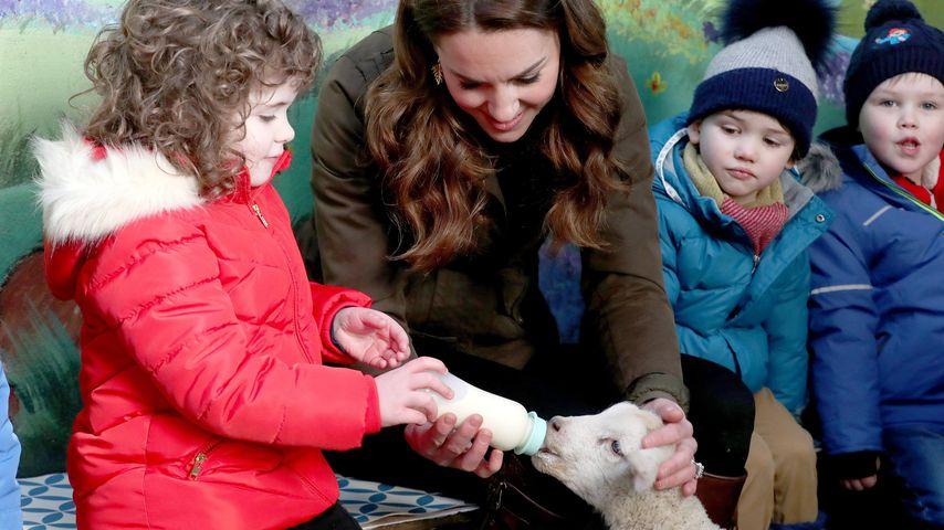 Herzogin Kate auf der Ark Open Farm in Newtownards