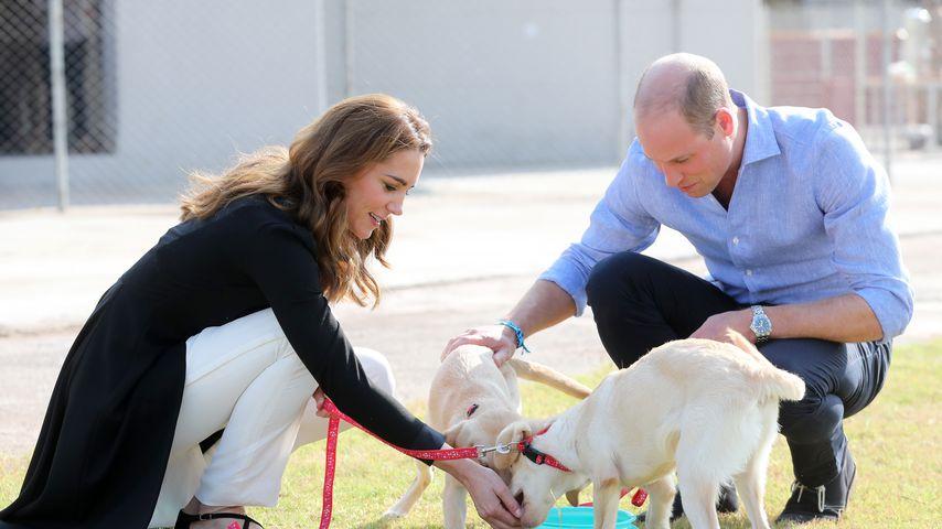 Streicheleinheiten: William und Kate besuchen Hunde-Center
