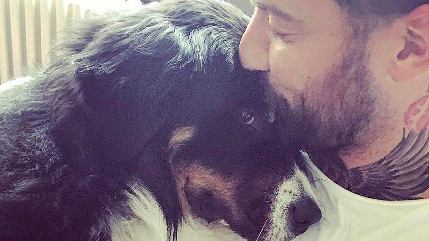 Endlich: Jan Leyks rührende Reunion mit seinem Hund!