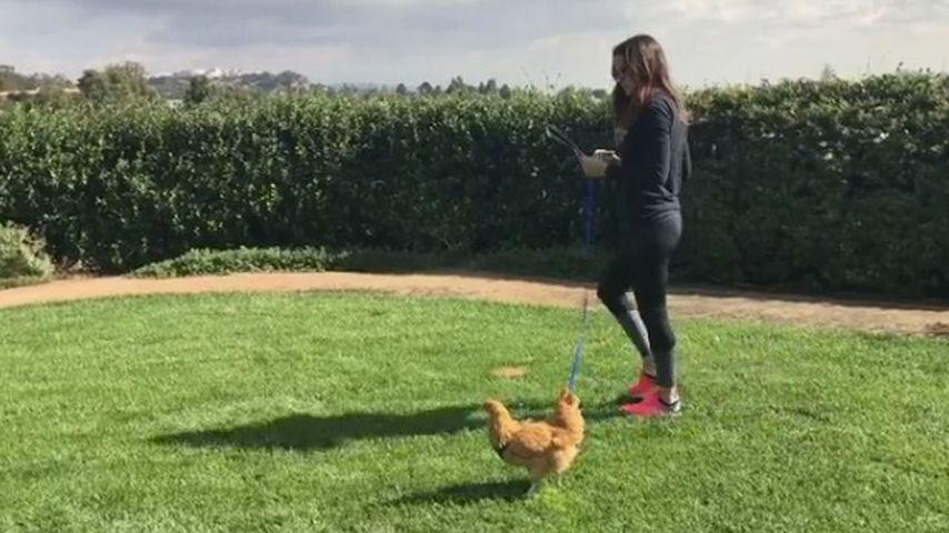 Jennifer Garner und ihr verstorbenes Huhn Regina George