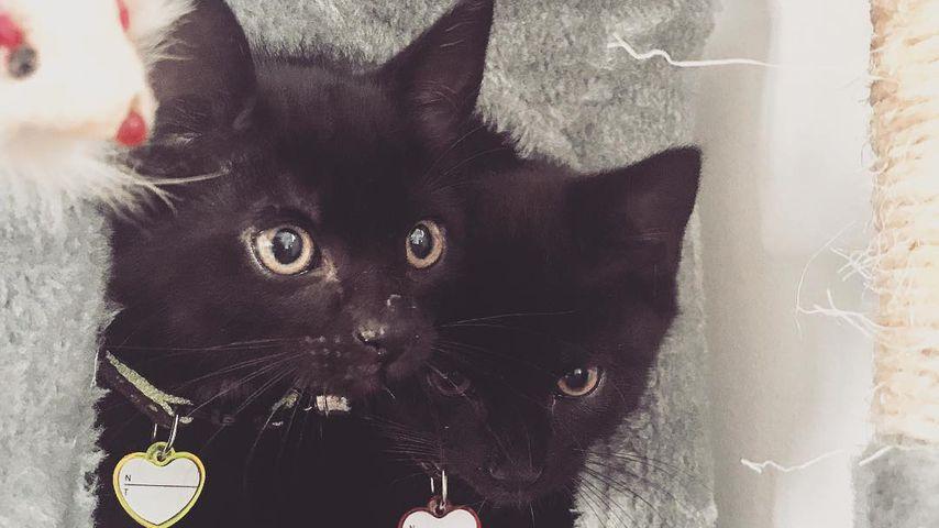 Jenny Frankhausers Katzen Louis und Molly