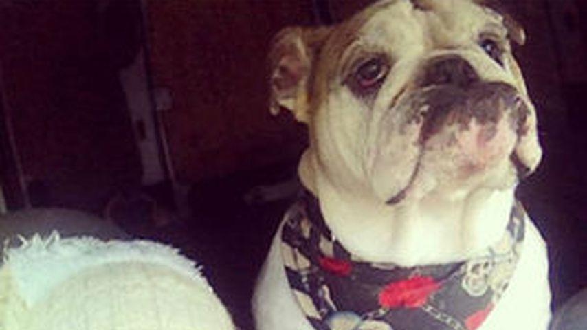 Jodie Marsh mit Hund Louie