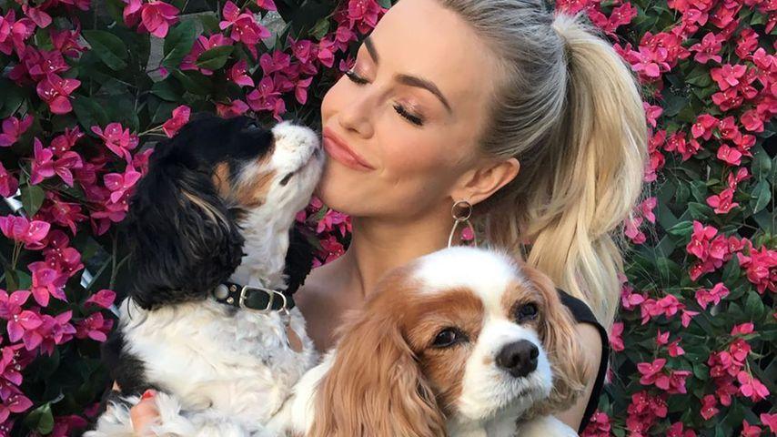 Julianne Hough trauert: Ihre Hunde starben am selben Tag!