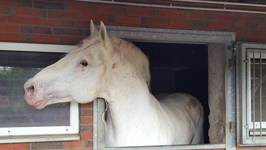 Jumper, Lieblingspferd von Tamme Hanken