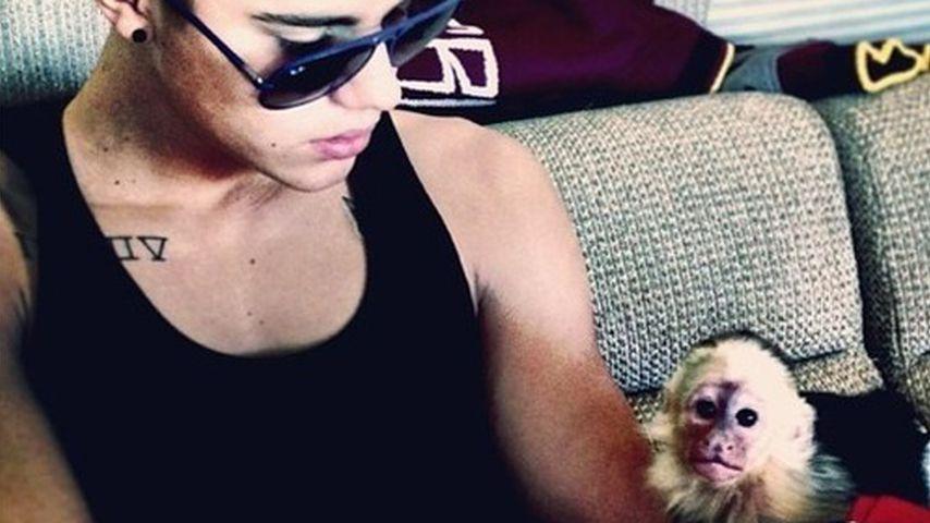Justin Bieber legt sich einen neuen Affen zu