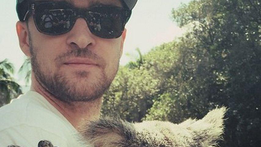 Tierisch süß! Justin Timberlake knuddelt Koala