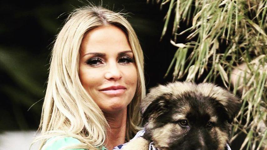 """""""Herz gebrochen"""": Katie Price' Hund wurde totgefahren!"""