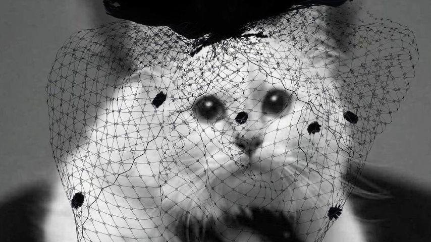 Karl Lagerfelds († 85) Katze Choupette hat Trauer-Kollektion