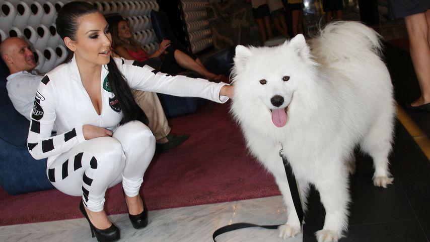 """Kim Kardashian: """"Ich bin nicht verrückt nach Haustieren!"""""""