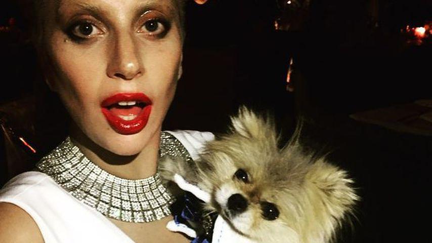 Lady Gaga mit einem ihrer Hunde, 2015