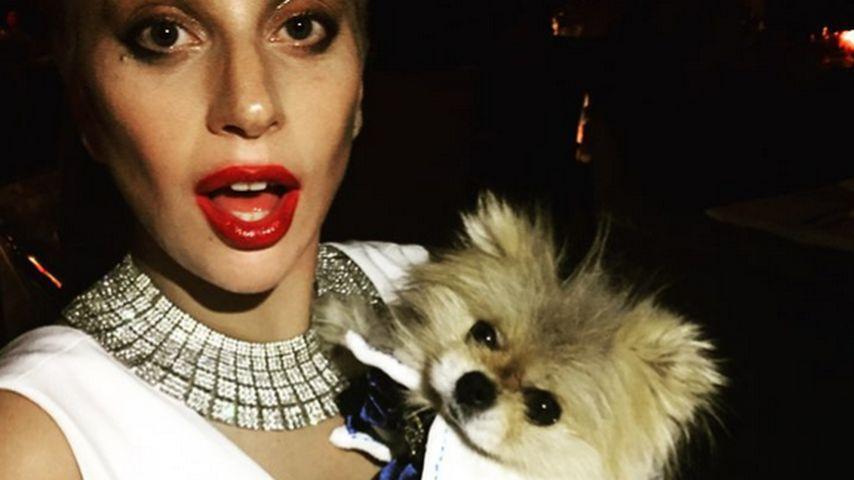 """Tierischer Star! Lady GaGa zeigt ihren """"Sexiest Man Alive"""""""