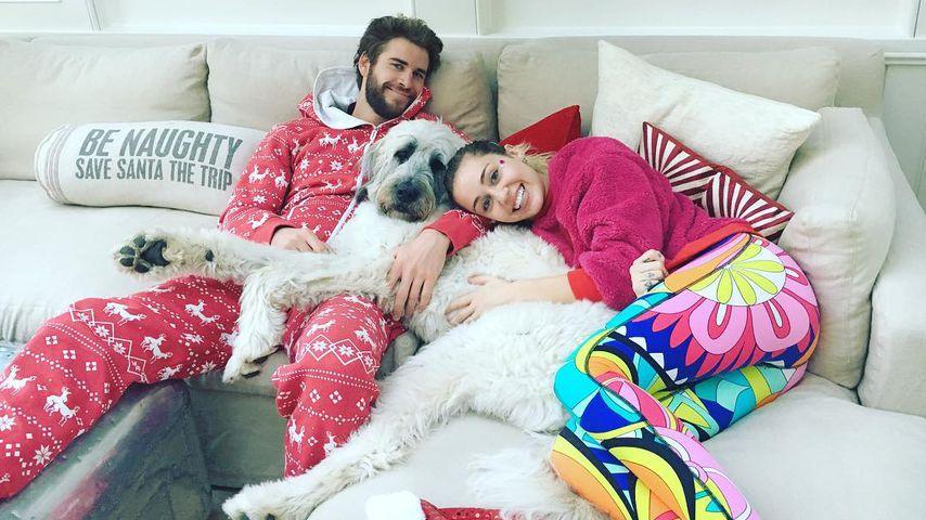 Liam Hemsworth und Miley Cyrus mit ihrem Hund Dora an Weihnachten 2016