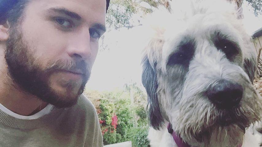 Liam Hemsworth und sein Hund