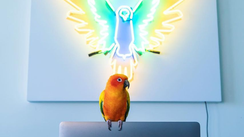 Logan Pauls Papagei