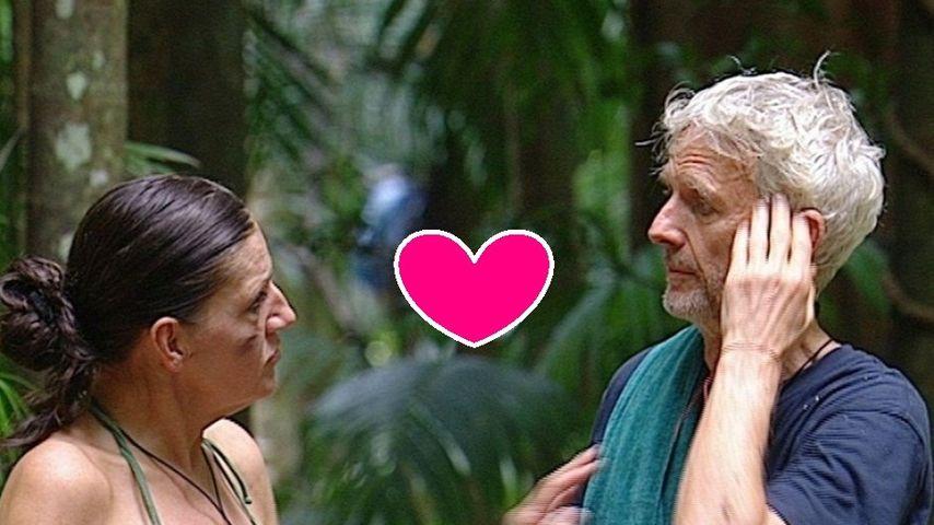 Dschungel-Liebe: Was geht zwischen Mathieu & Katy?