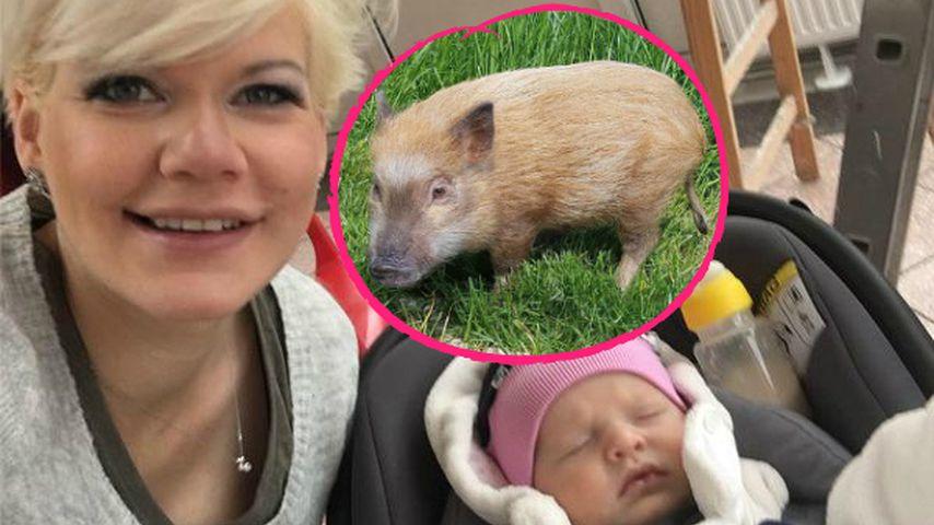 Uwe pinkelt rum: Melli Müllers Schwein eifersüchtig auf Baby