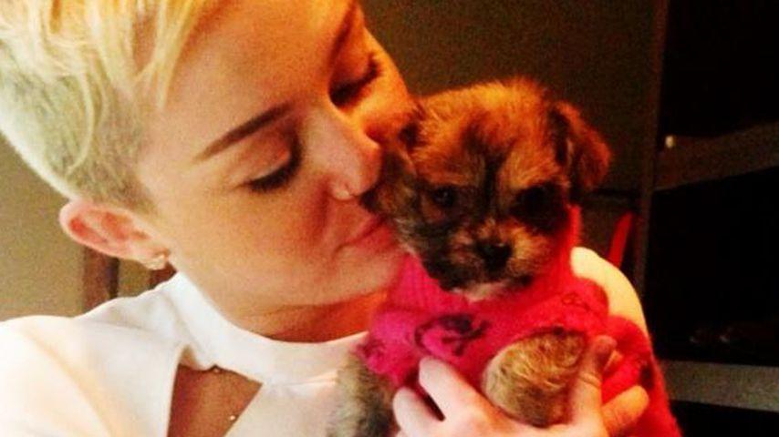 Miley Cyrus: Das sind ihre Hochzeits-Bedingungen