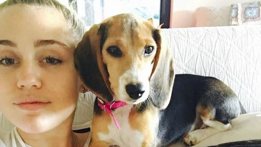 Miley Cyrus mit ihrer Beagle-Dame Barbie