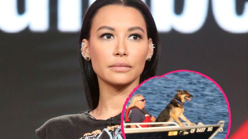 Leichenspürhunde suchen jetzt nach vermisster Naya Rivera
