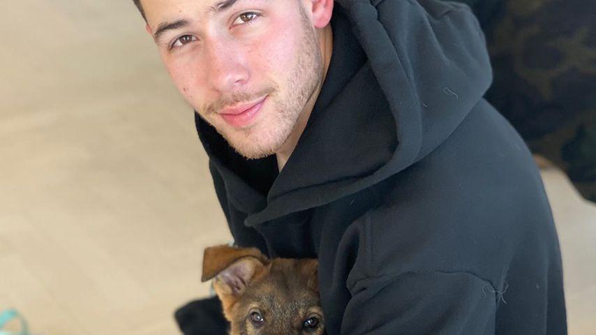 Nick Jonas und Hund Gino