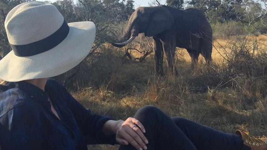 Nicky Hilton: Wilder Elefant mischt ihre Flitterwochen auf