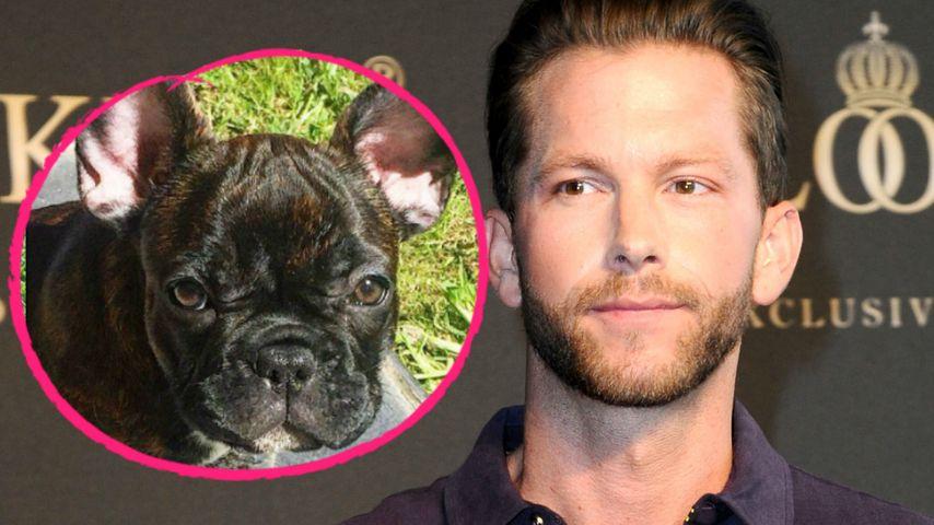 Wie süß! Hunde-Nachwuchs bei Ex-Bachelor Oliver Sanne