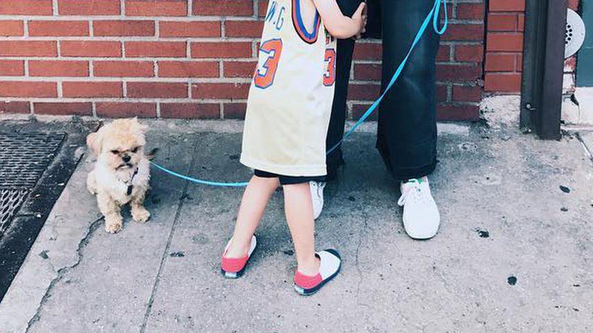Elvis, Hund von Olivia Wilde, schaut grimmig