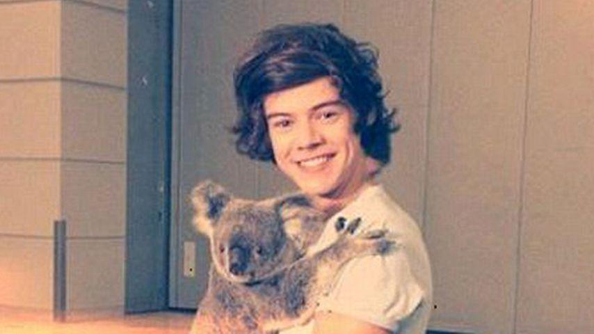 One Direction-Harry kuschelt mit Koala
