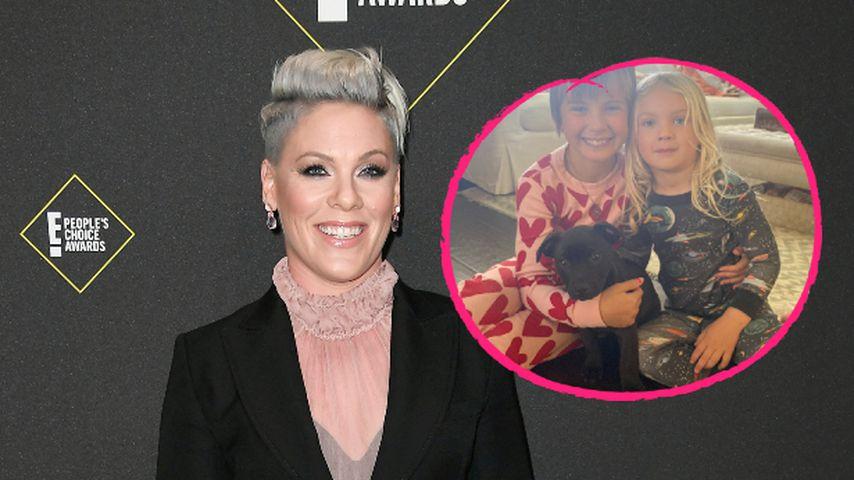 Neues Familienmitglied: Sängerin Pink rettet Hundewelpen
