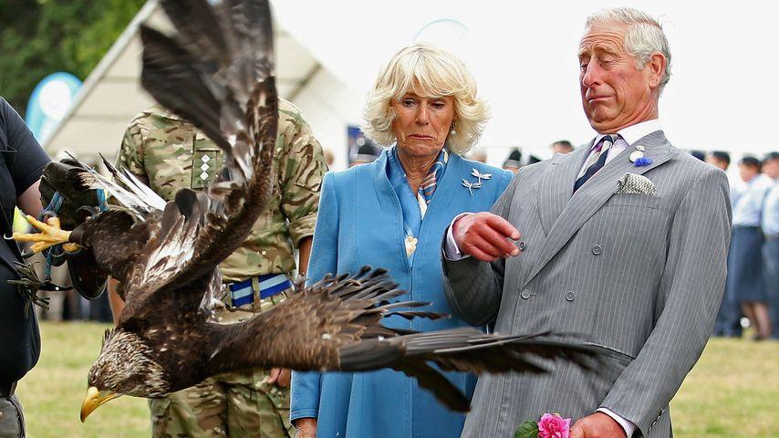 Herrliche Bilder: Prinz Charles von Riesen-Adler attackiert