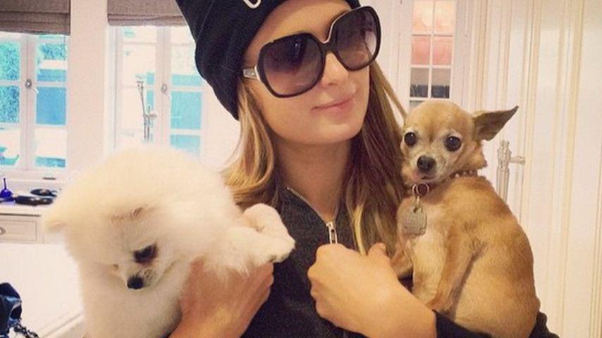 Am Boden zerstört! Paris Hilton trauert um Tinkerbell