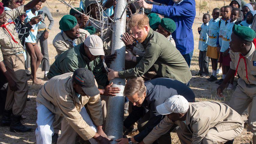 Prinz Harry im Chobe National Park in Botswana