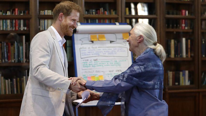 Prinz Harry und Jane Goodall auf einer Veranstaltung in Windsor